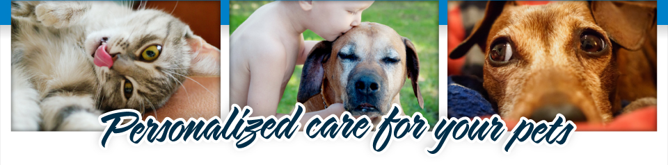 Personalized care for your pets | Loving Pets