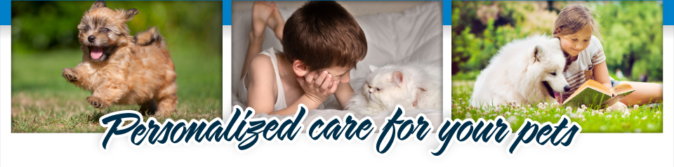 Personalized care for your pets | Playful Pets